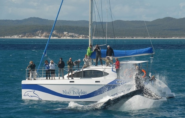 Whale Watching Tours on Hervey Bay
